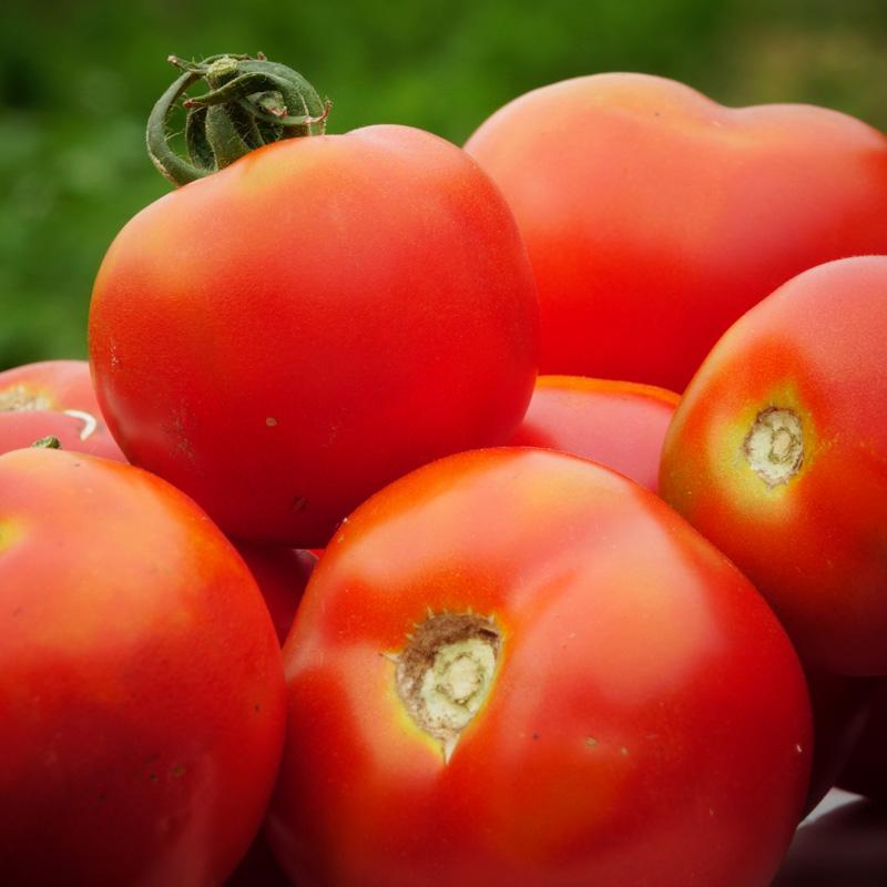 Tomate Corma