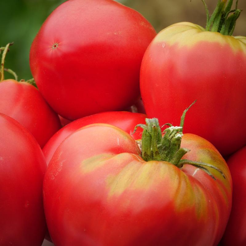 Tomate Cuor di bue (Cœur de Bœuf)